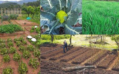 "Otro tipo de agricultura ""Agricultura Biodinámica"""