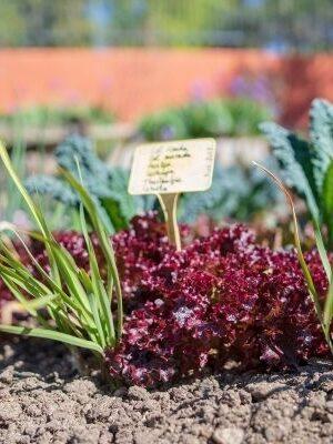 Huerta y jardín Ecológico